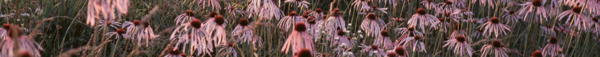 Testimonials - image echinacea-strip-for-newsletter-copy on https://angelaferri.com